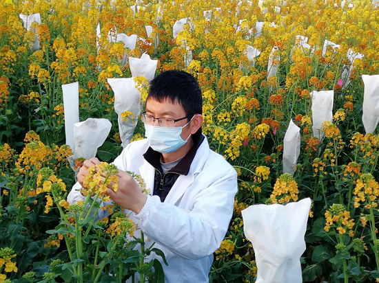 Ministry provides boost to GMOs