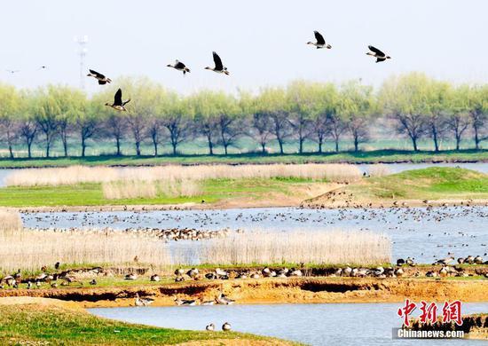 Wetland park in Wuhan helps migratory birds get through winter