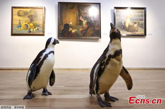 Penguins of Russian circus 'visit' art museum