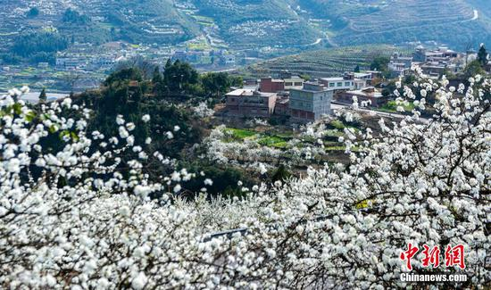 Sea of spring flowers in full bloom in Sichuan