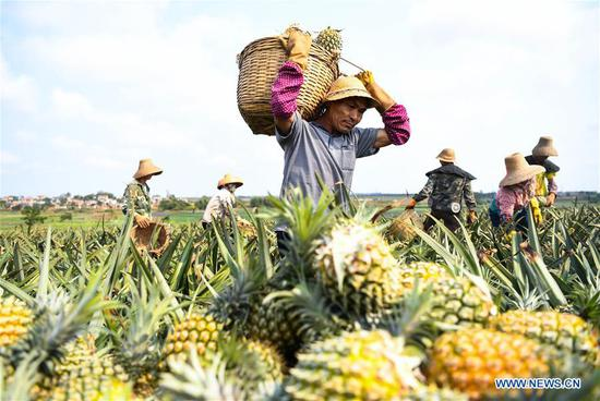 DPP politicizes pineapple imports suspension to provoke anti-mainland sentiment