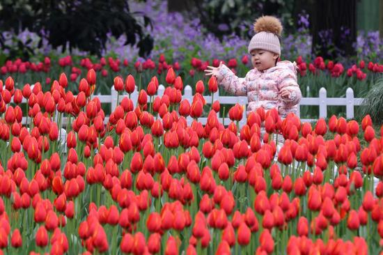 Tulip bulbs to bloom in east China's Nanjing