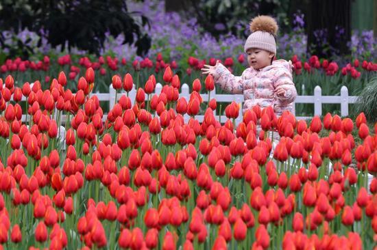 郁金香灯泡在华东的南京绽放