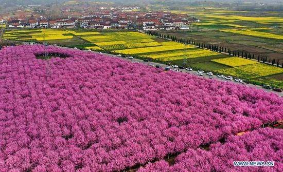 Spring scenery in Hanzhong