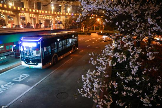 Cherry blossoms bloom at Shanghai's most beautiful bus station