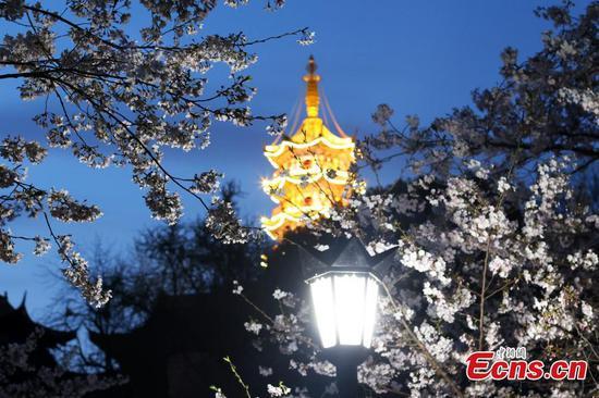 Night scenery of cherry blossoms in E China