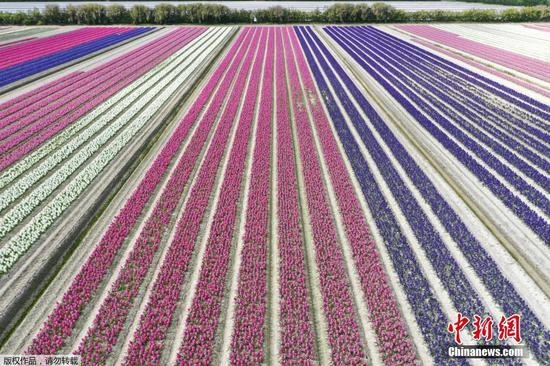 Spring flowers in full bloom in France