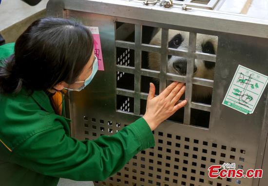 武汉告别心爱的熊猫
