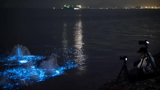'Blue tears' light up waters in Xiamen