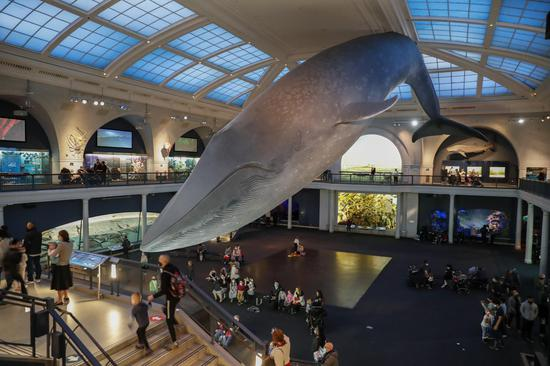 American Museum of Natural History sees increasing number of visitors