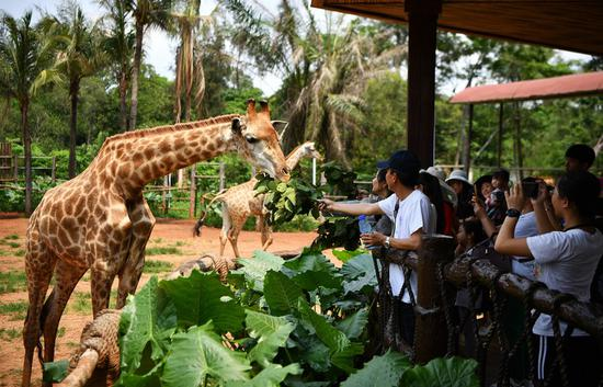 China's domestic tourism near pre-epidemic level during Qingming holiday