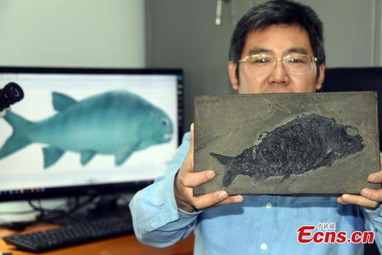 Chinese scientists discover neopterygian fish fossil 244 mln-year ago