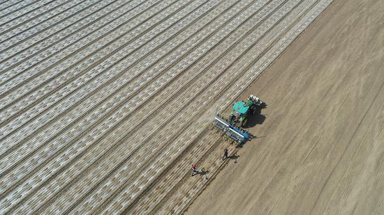 BeiDou directed seeders work in Xinjiang's cotton fields