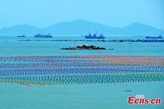 Aquaculture floats at sea farm in Lianjiang, Fujian