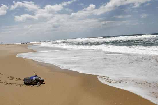 Wounded turtle returns to sea after treatment in Israel
