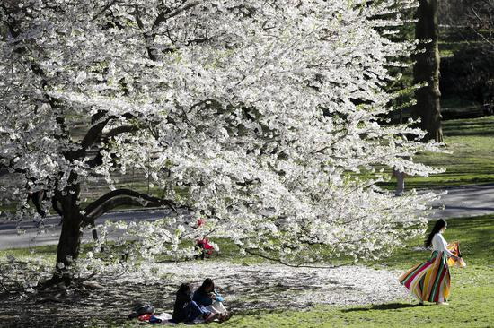 Spring scenery in New York's Central Park