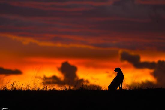 Photographer captures images of wild animals under sunrise