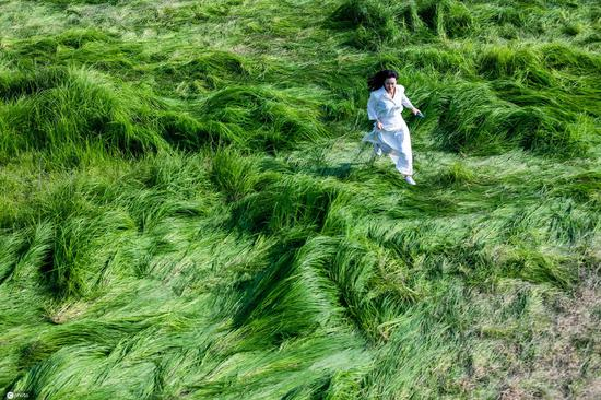 Sea of grasses attracts tourists in Nanjing