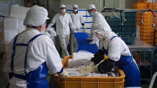 Workers at LK Seafood are packing ocean fish, in Gunsan, South Korea. (CGTN)