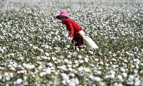 China Cotton Association issues industry standards to promote Chinese cotton