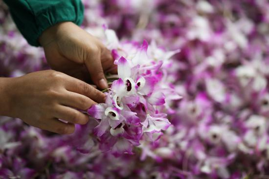 Flower economy blooms in Guizhou Province