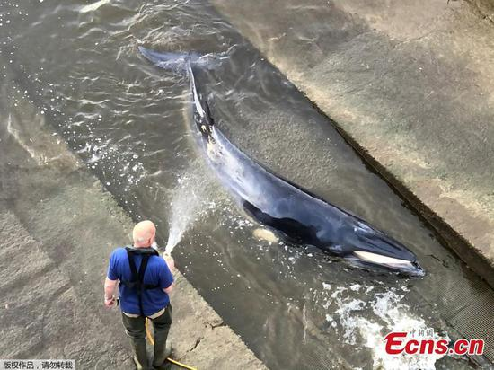 Rescuers save small whale stranded in the Thames