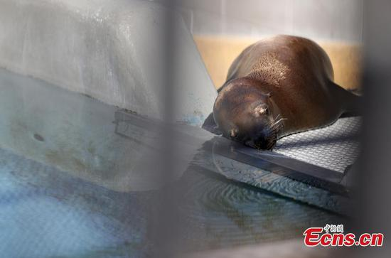 Sea lion cancer linked to toxic waste dumping off California's coast