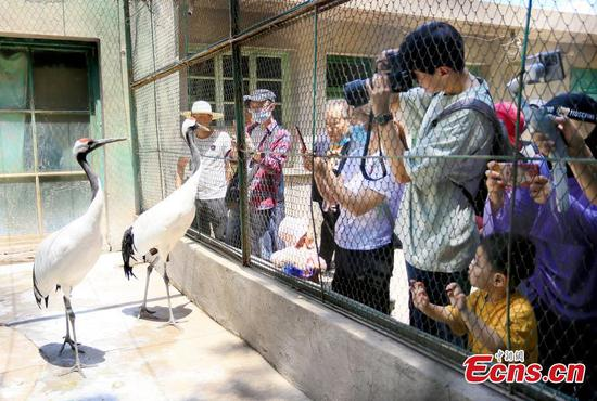 Citizens line up to visit Lanzhou Zoo before its relocation