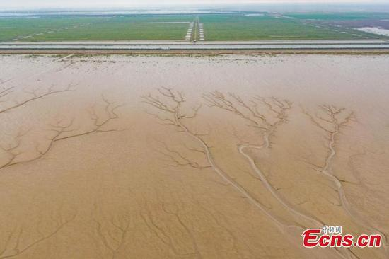 Tiaozini Wetland shows harmonious coexistence of human and nature