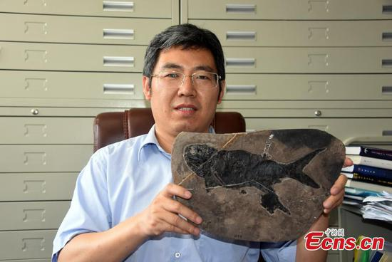 Chinese scientists discover ray-finned fish fossil 244 mln-year ago