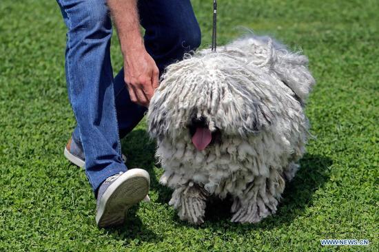 Dog show held near Bucharest, Romania