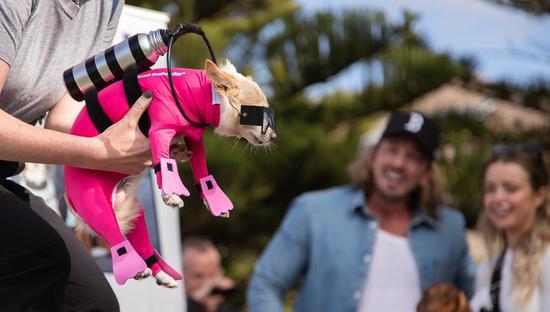 Pound Paws Dog Day at Bondi Beach in Sydney