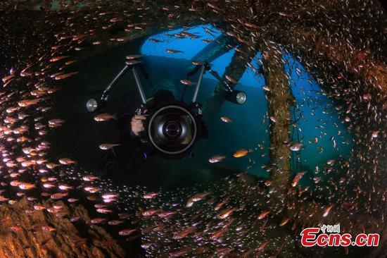 Stunning sea world exposed by underwater photographers in Hainan