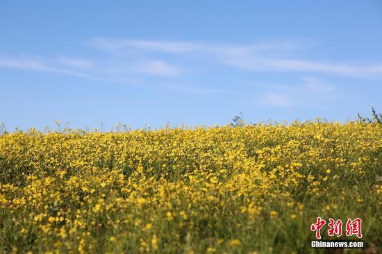Wild flowers in full bloom on Zhaosu Prairie in Xinjiang