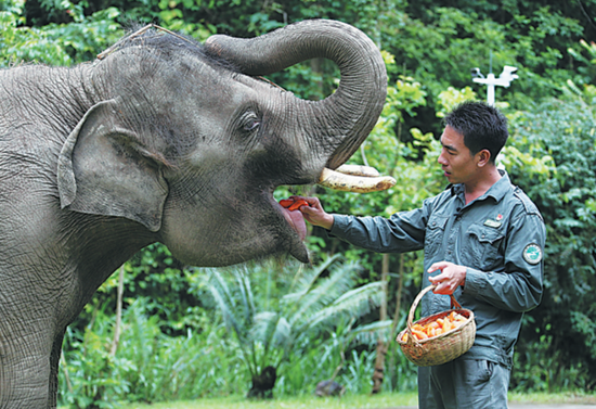 'Elephant dads' forge bond with animals