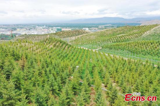 Ecological forests turns abandoned land green