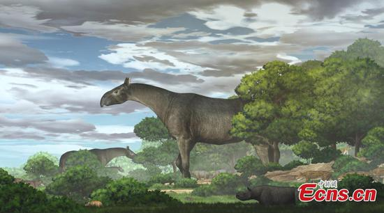 New fossils of giant rhino found in Gansu dates back to 26.5 million years ago
