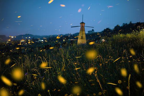 Fireflies light up Zhangzhou village