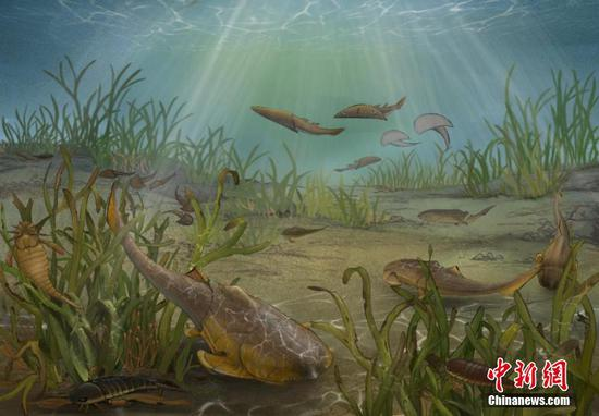 New species dating back 423 million years discovered in Chongqing