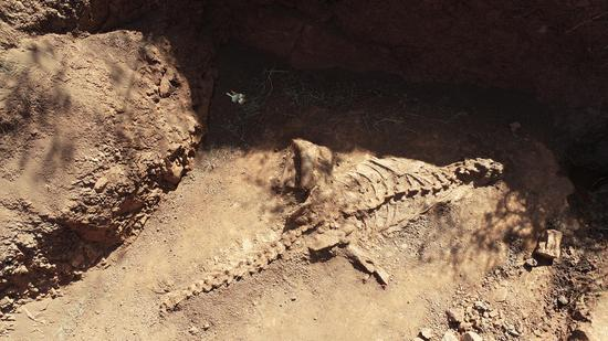 Almost intact dinosaur fossil unearthed in SW China's Yunnan