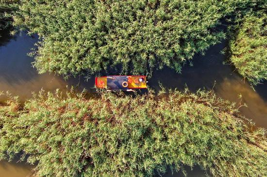 Aerial photo of 'reed maze' in Jiangsu