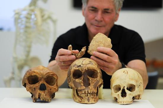 New early human discovered at Israeli cement site