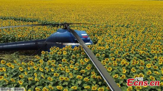 Russian helicopter makes crash landing in sunflower fields