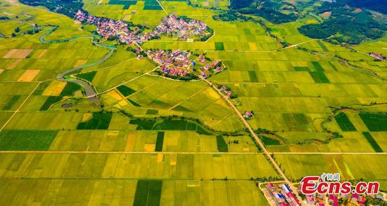 Aerial views of farmlands in Jiangxi Province