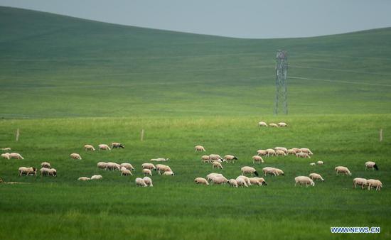 Scenery of Xilingol Grassland in Inner Mongolia