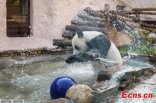 Animals in Moscow Zoo cool off during hot summer day