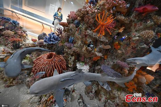 Frankfurt museum opens coral reef exhibition