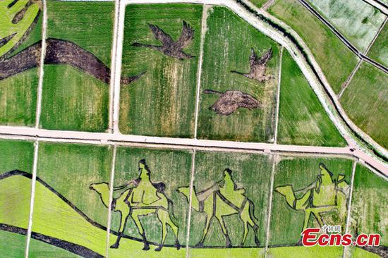 Grand picture shows up in rice fields in Gansu