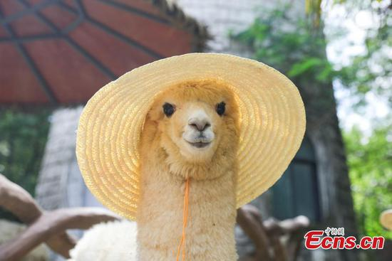 Animals in Jiangsu enjoy 'cool' summer days