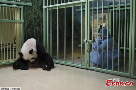 Pregnant giant panda Huan Huan expects twins in France